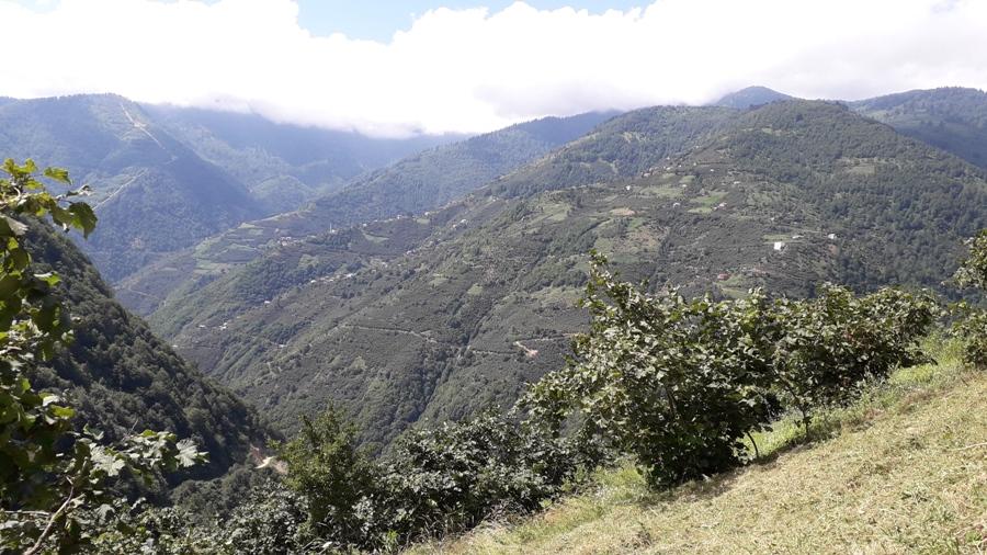 Gümüşhane'nin Üçtaş köyü karantinaya alındı